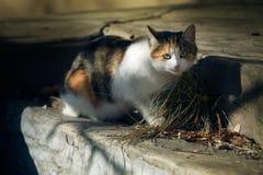 Dame in den Stellen, Katze lizenzfreie stockfotografie