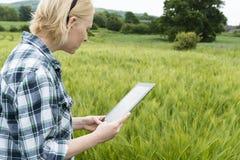 Dame in der grünen Wiese, die auf Tablet-Schirm flüchtig blickt Lizenzfreie Stockbilder