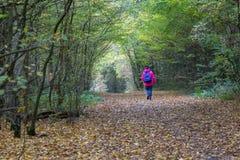 Dame, die auf einen Landweg im Wald geht Lizenzfreies Stockfoto