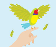 Dame Gouldian Finch Bird On Hand Stockfotos