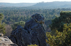 Dame jouanne rock in Fontainebleau forest Stock Photos