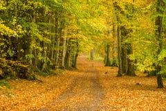 Dame Marys Walk, Crieff, Schottland, Großbritannien Stockfotos