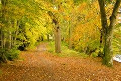 Dame Marys Walk, Crieff, Schottland, Großbritannien Stockbilder