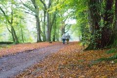 Dame Marys Walk, Crieff, Schottland, Großbritannien Stockfotografie
