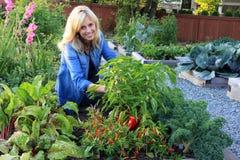 Dame plantaardige tuinman Royalty-vrije Stock Afbeeldingen