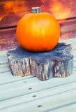 Dame Pumpkin Stock Foto's