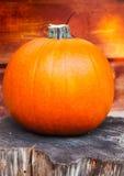 Dame Pumpkin Stock Fotografie