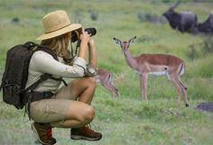 Dame in Safari Attire Taking Photographs van het Afrikaanse Wild Stock Afbeeldingen