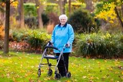 Dame supérieure avec un marcheur en parc d'automne Photo stock