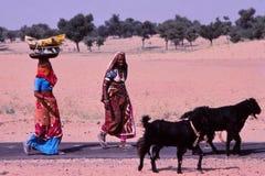 Damen, die Körbe, Jaisalmer, Indien tragen lizenzfreies stockfoto