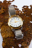 Damen-Uhr Lizenzfreie Stockfotos