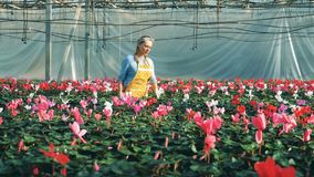 Damenflorist beobachtet blühende Blumen im Grün stock footage