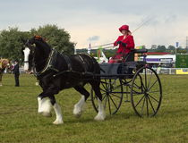Damer cart draget av grevskapet Arkivfoton