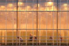 Damer väljer blommor i ett växthus under en brinnande morrande fotografering för bildbyråer