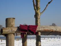 Damhandhandskar - rödbrun/Bourgognefärg - som hängs på trästaketet i snö laden jordning Arkivbilder