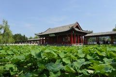 Daming Lake in Jinan Stock Afbeelding