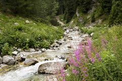 Damjanitza. Creek in the pirin maountains in bulgaria Stock Photography
