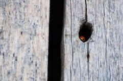 Damknopp som hidding i ett wood hål arkivbild
