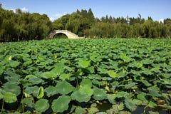 Damm av Lotus och bron royaltyfri bild