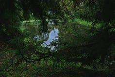Damm av damm som omges av prydliga filialer Arkivbilder