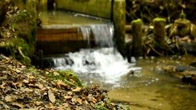 Damm in einem deutschen Wald stock footage