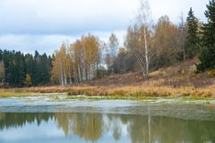 Damm i den Abramtsevo Museum-reserven i hösten, Moskvaregion, Ryssland Arkivbild