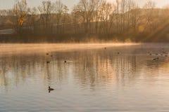 Damm i den diffusa morgondimman Arkivfoton
