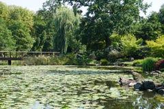 Damm i den Japaneese trädgården i Wroclaw royaltyfria bilder