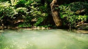 Damm i en tropisk skog Arkivfoto