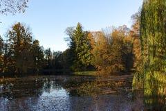 Damm i höst parkerar Royaltyfri Fotografi