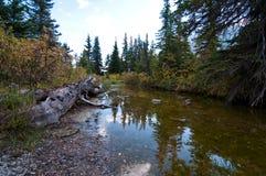 Damm i skogen Arkivfoto