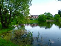 Damm i sommar Arkivbilder