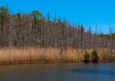 Damm i vår Royaltyfri Foto