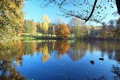 Damm med den färgrika höstskogen och klar himmel Royaltyfri Fotografi