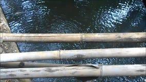 Damm med fisken och gammal bambu på ÖVERKANTEN arkivfilmer