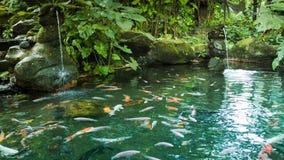 Damm med fisken och vattenfall arkivfilmer