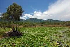 Damm med liljor Fotografering för Bildbyråer