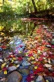 Damm med nedgångfärg Arkivbilder