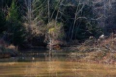 Damm med reflexioner fotografering för bildbyråer