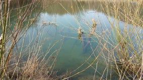 Damm med undervattens- växter arkivfoto