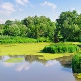 Damm med växter royaltyfri fotografi