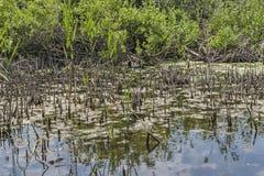 Damm med vatten lilly Royaltyfria Bilder
