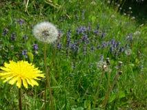 Damm mit Gras und Löwenzahn und blaue Wildflowers lizenzfreies stockfoto