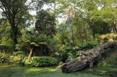 Damm och stupat träd i Abbotsbury trädgårdar Arkivbilder