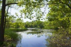 Damm och träd för NPV-naturmitt arkivfoton