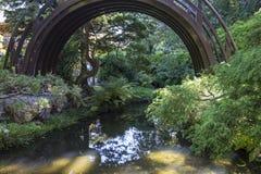Damm och träd i en japanträdgård Arkivbild