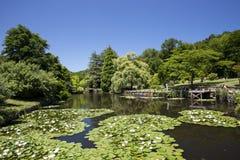 Damm på arboretumen Royaltyfria Foton