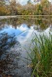 Damm på den BogueChitto delstatsparken, Louisiana royaltyfri bild
