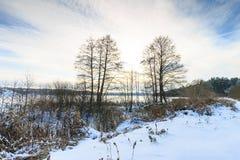 Damm som täckas med frost på pinjeskogen Arkivbilder