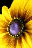 dammad av pollen Royaltyfria Foton